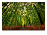 The Bamboo Forest Premium Photographic Print by Trey Ratcliff