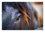 The Gentle Eye of the Beast Premium Photographic Print by Trey Ratcliff