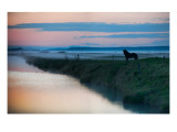The Silent Horse in the Fog Premium Photographic Print by Trey Ratcliff