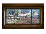 Horse in Window Premium Photographic Print by Trey Ratcliff