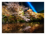 The Midnight Wonder Garden Premium Photographic Print by Trey Ratcliff