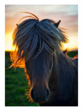 The Horse of Sagas Premium Photographic Print by Trey Ratcliff