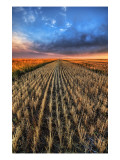 Cutting the Wheat Premium Photographic Print by Trey Ratcliff