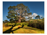 Bilbo's Hobbit Hole and the Party Tree in the Shire Premium Photographic Print by Trey Ratcliff
