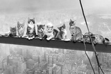 Cats On Girder- Photo