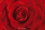 Rose-Je Taime Affiches