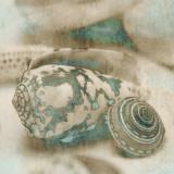 Coastal Gems I Poster af John Seba