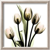 Crystal Flowers X-ray, Tulip Bouquet Prints by Albert Koetsier