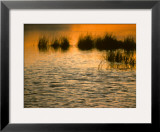 Marsh at Sunrise Framed Photographic Print by Michael S. Quinton