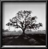 Oak Tree, Sunrise Print by Ansel Adams