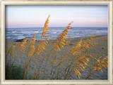 Beach Scene with Sea Oats Framed Photographic Print by Steve Winter