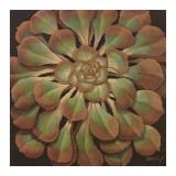 Succulent II Prints by Janet Kruskamp