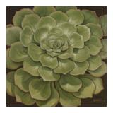 Succulent I Prints by Janet Kruskamp