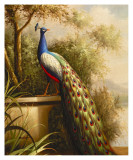 Regal Peacock Poster van Unknown