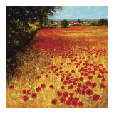 Field of Red and Gold Posters by Steve Thoms