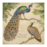 Peafowls Prints by Betty Whiteaker