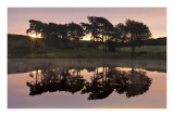 Trees in Reflection I Prints by Robert Strachan