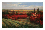 Tuscan Fields of Red Poster by Matt Thomas