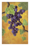 Red Wine Grapes Art by Jennifer Lorton