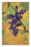 Red Wine Grapes Art PrintJennifer Lorton