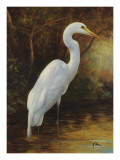 Evening Egret Print by  Kilian