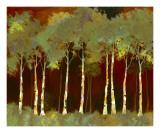 Birches Three Posters by Susanne Darius