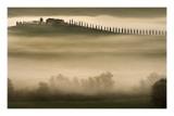 Trees in Mist II Posters by Jim Gamblin