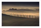 Trees in Mist I Art by Jim Gamblin