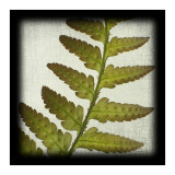 Red Fern Poster by June Hunter