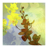 Orchid Shadows II Poster van Jan Weiss