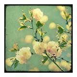 Vintage Botanical IV Affiche par Irene Suchocki
