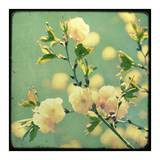 Vintage Botanical IV Prints by Irene Suchocki