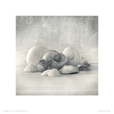 Still Life of Shells II Giclee Print by Ian Winstanley