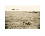 In The Tall Grass, Serengeti Giclee Print by Lorne Resnick