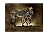 Zebra Grevys Giclee Print by Marina Cano