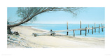 Beach Tree With Jetty Giclee Print by Alexander Slatter