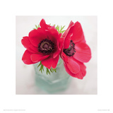 Red Anemones Giclee Print by Ian Winstanley