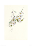 Daisies Giclee Print by Hannah Pontin