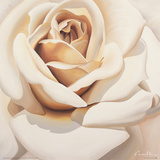 Rose Giclee Print by Carolina Alotus