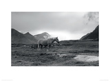 Grazing Together, Lofoten Islands Giclee Print by Andreas Stridsberg
