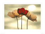 Icelandic Poppies Impresso gicle por Yoshizo Kawasaki