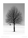 Winter Tree Giclee Print by Ilona Wellman