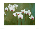 Orchid in Greens Giclee Print by Nicola Acaster