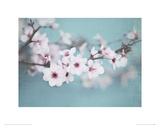 Plum Blossom Giclee Print by Shana Rae