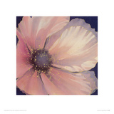 Pale Pink Petals Giclee Print by Maggie Thompson