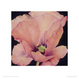 Delicate Pink Poppy Giclee Print by Maggie Thompson