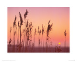 Fenland Sunrise Giclee Print by Rod Edwards