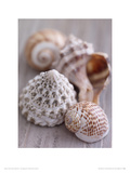 Shell Collection Giclee Print by Lauren Floodgate