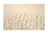 Field Of Starry White Flowers Giclee Print by Simon Fairless