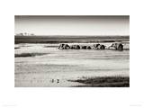 Chobe River Botswana Giclee Print by Philippe-Alexandre Chevallier